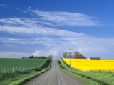 Road Running Through Canola and Wheat Fields, Grangeville, Idaho, USA Photographic Print by Terry Eggers