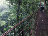 Visitors on Suspension Bridge Through Forest Canopy, Monteverde Cloud Forest, Costa Rica Photographic Print by Scott T. Smith
