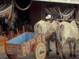 Ox Cart in Artesan Town of Sarchi, Costa Rica Photographic Print by Stuart Westmoreland