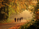 Walkers Among Trees in Autumn Foliage, Seattle, U.S.A. Photographic Print by Ann Cecil