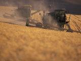 Wheat Combines at Fall Harvest, Washington, USA Fotografiskt tryck av William Sutton