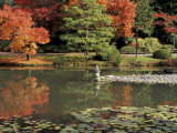 Reflecting Pool in Japanese Garden, Seattle, Washington, USA Photographic Print by Jamie & Judy Wild