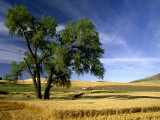 Lone Tree in Harvest Time Field, Palouse, Washington, USA Photographic Print by Terry Eggers