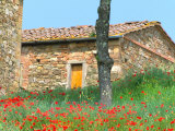 Abandoned Villa with Red Poppies, Tuscany, Italy Photographic Print by Julie Eggers
