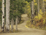 Rural Forest Road Through Aspen Trees, Gunnison National Forest, Colorado, USA Photographic Print by Adam Jones