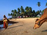 Woman and Cow on Beach, Anjuna Flea Market, Anjuna, India Stampa fotografica di Peter Ptschelinzew