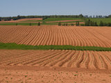 The Furrows in the Red Dirt of the Island Produce Great Potatoes, Prince Edward Island, Canada Photographic Print by Taylor S. Kennedy