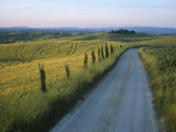 Sunset View of a Gravel Road Winding Through the Tuscan Countryside Valokuvavedos tekijänä Taylor S. Kennedy