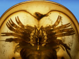 A Close View of the Underside of a Horseshoe Crab Photographic Print by Darlyne A. Murawski