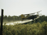 A Crop Dusting Airplane Flys Low Over a Field to Drop Pesticide Photographic Print by Bill Curtsinger