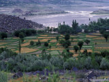 Agriculture Fields, Indus Valley, Pakistan Photographic Print by Gavriel Jecan