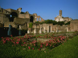 The Garden of the Vestal Virgins in the Roman Forum Photographic Print by Taylor S. Kennedy