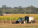 Harvesting Sugarcane near Hervey Bay, Queensland, Australia Lámina fotográfica por David Wall