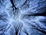 Winter View of Canopy, Jasmund National Park, Island of Ruegen, Germany Photographic Print by Christian Ziegler