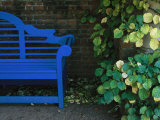 A Brightly Colored Blue Bench at the Chicago Botanic Garden Photographic Print