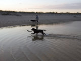 Twp Black Labradors Running on Beach in Cape Cod, United States Photographic Print by Keenpress