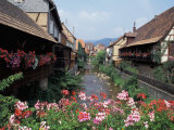 Nik Wheeler - Colmar, Route du Vin, Alsace, France - Fotografik Baskı