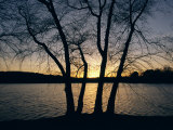 Trees Alongside Jamaica Pond Silhouetted by the Setting Sun Photographic Print by Melissa Farlow