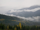 A Foggy and Misty Day in the Pacific Northwest Photographic Print by Taylor S. Kennedy