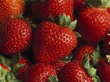 Fresas frescas Lámina fotográfica por Kennedy, Taylor S.