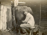 Farmworker Milks a Cow by Hand in a Very Primitive Cow- House Photographic Print
