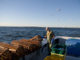 A Lobsterman Prepares to Release His Traps Photographic Print by Taylor S. Kennedy