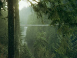 A Bridge Spans a Salmon Spawning River in a Temperate Rainforest Photographic Print by Taylor S. Kennedy