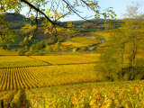 Lisa S. Engelbrecht - Autumn Morning in Pouilly-Fuisse Vineyards, France Fotografická reprodukce