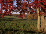 Autumn Color Frames the Rolling Hills of the Virginia Foxhunt Country Photographic Print by Stephen St. John