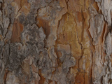 Close-up of Brown and Gray Rough Tree Bark Photographic Print