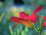 Orange Day Lily, Richmond, VA Photographic Print by Steven Emery