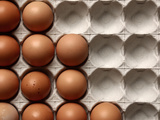 Container of Eggs Photographic Print
