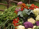 A Colorful Pile of Freshly Harvested Vegetables Photographic Print