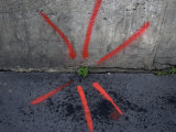 Neon Paint Points to a Plant Emerging from a Crack in the Sidewalk Photographic Print by Cotton Coulson
