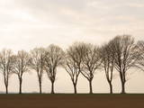 Row of Trees Photographic Print