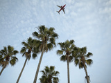 Plane Flying Over Tropical Palm Trees Photographic Print