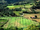 Aerial of Farmland, Crete, Greece Photographic Print by John Elk III