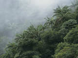 Foggy Rain Forest with Palm Trees on a Taveuni Island Hillside Photographic Print by Tim Laman