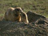 Two Prairie Dogs at the Entrance to Their Den Photographic Print by Annie Griffiths Belt