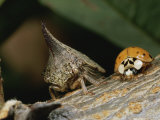 Ladybug and a Leafhopper Encounter Each Other on a Twig Photographic Print by George Grall