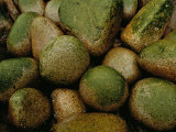 Close View of Moss-Covered Stones in Rain Photographic Print by Raymond Gehman