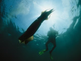 Diver Swimming near a Giant Or Humboldt Squid Photographic Print by Brian J. Skerry