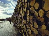 A Wall of Newly Delivered Spruce and Fir Logs Photographic Print by Ira Block