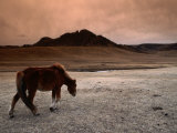 The Wild Horse of Mongolia Photographic Print by Olivier Cirendini