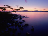 Silhouette of Tree at Sunset, Anacortes, WA Photographic Print by Jim Corwin