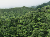 Elevated View of Forest-Covered Mountains in Morning Fog Photographic Print by Tim Laman
