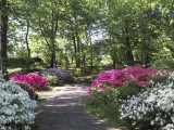 Azalea Way, Botanical Gardens, Bronx, NY Photographie par Lauree Feldman