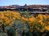 Cottonwoods along Squaw Creek at the Needles, Canyonlands National Park, USA Fotografisk tryk af John Elk III