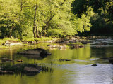 Hardwood Forest on the Eno River in Spring Photographic Print by Raymond Gehman