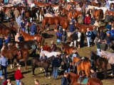 The Masses Gather for the Ballinasloe Horse Fair, Ballinasloe, Ireland Fotografie-Druck von Doug McKinlay